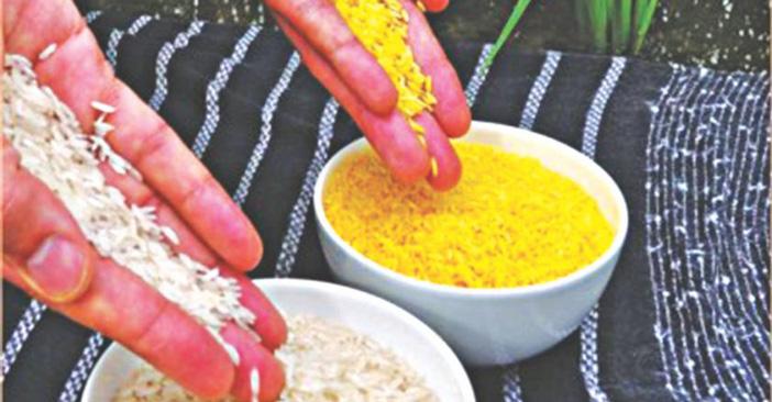 生物黄金大米