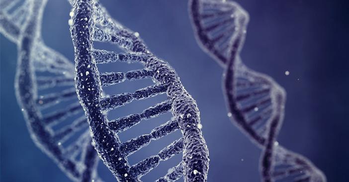生物竞赛中DNA的解释