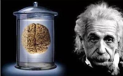 爱因斯坦的大脑