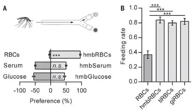 hmbRBCs的觅食实验