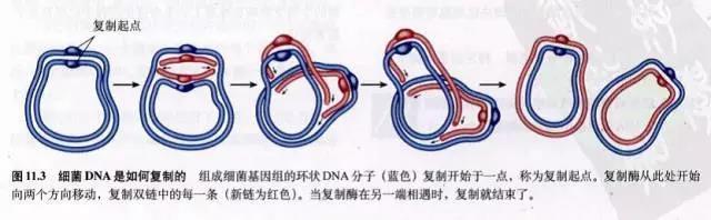 原核生物分裂
