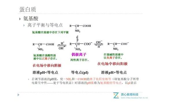 结构单体氨基酸