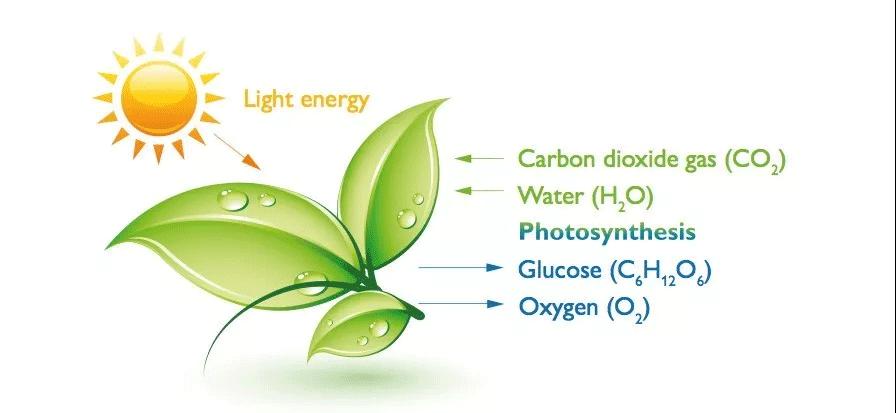 植物的光合作用