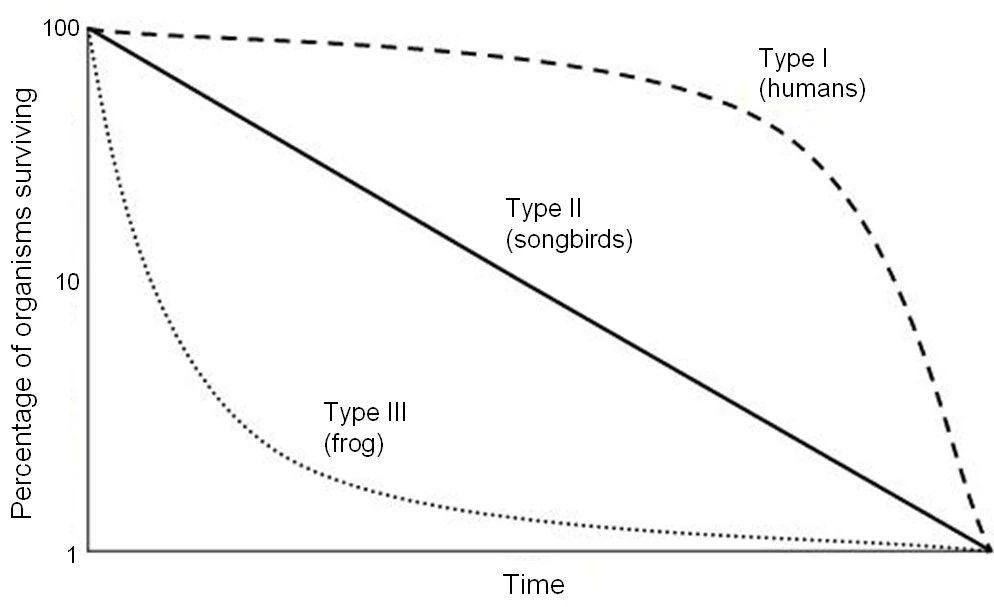 图2 存活曲线  (图片来自于网络)