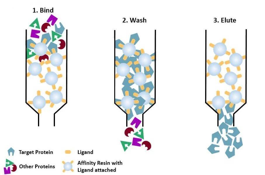 图4 亲和层析原理图  (图片来自于网络)